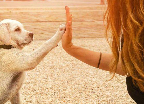Come conquistare il cuore dei clienti del tuo studio veterinario